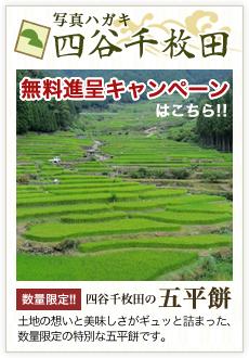写真ハガキ 四谷千枚田 無料進呈キャンペーン